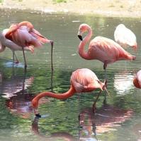 Flamingos-cagliari