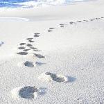 Strand weiß Golfo Aranci