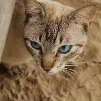 cat beach Sardinia